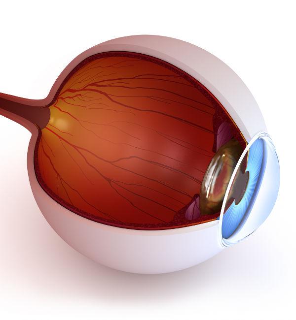 Imagen Óptica fisiológica Asoaciación Española de Optometristas Unidos